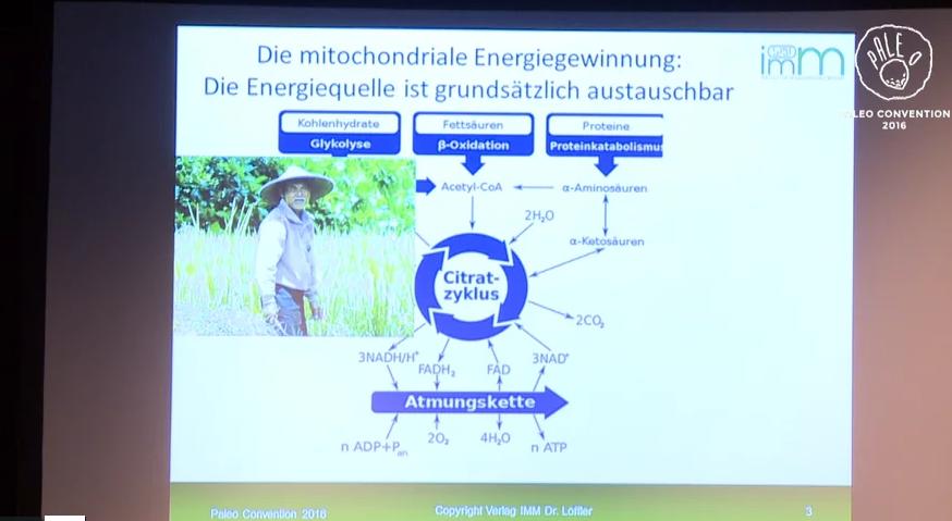 Dr. med. Dipl. Biol. Bernd Löffler – Folgen und Auswirkungen einer glucotoxischen Ernährung